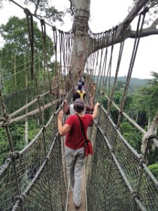 Weekend field trip to nearby Kakum National Park's canopy walk offers an opportunity for participants to jointly face their fears and build team trust. August 2015