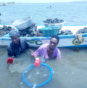 two people wading in chest-high water harvest oysters