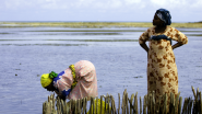Two women checking for oysters