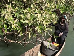 mangrovewoman